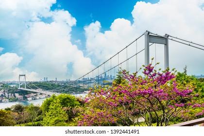 Judas trees (Turkish: Erguvan) in Istanbul. Beautiful spring view of the Istanbul Bosphorus from Otagtepe. Fatih Sultan Mehmet Bridge. Istanbul, Turkey.
