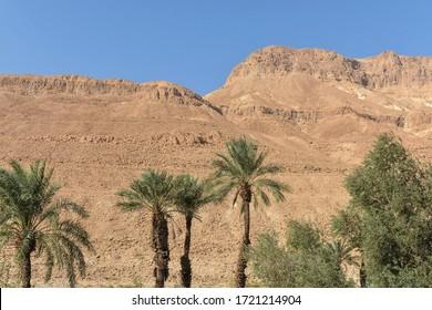 Judean Desert in Israel. Desert landscape in the east of Israel in November.