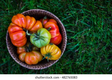 juicy colorful tomatoes in basket