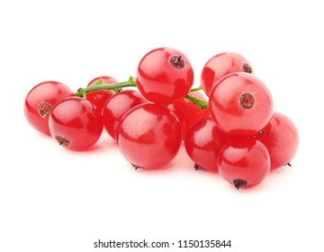 Juicy currant. Fresh red currant isolated on white background