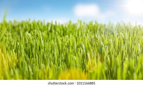 Juicy grass and sunshine