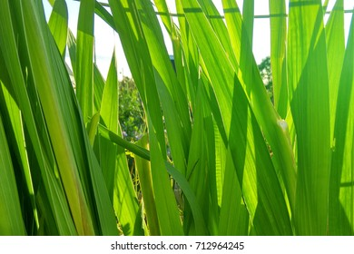 juicy green grass texture