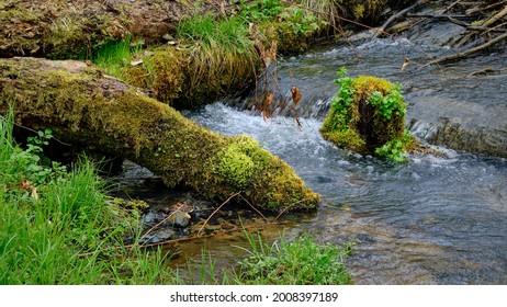 """Juicy green spring grass and moss-covered deadwood at the Brandenburg nature reserve """"Nonnenfliess"""" near """"Forsthaus Geschirr"""""""