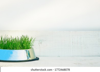 Juicy green sprouted grass in a bowl for the proper diet of pets grown at home. Light white wooden background. Place for text