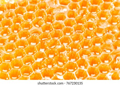 juicy honeycombs texture extreme close-up background