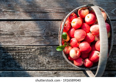 Juicy red apples in a basket on a textured table background, top view, flat lay. Space for text. Apple harvest theme