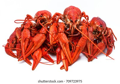juicy red crawfish with large claws, isolated on white background.