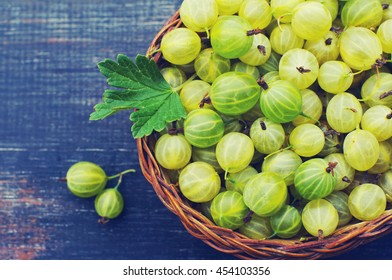 Juicy ripe berries of a gooseberry in a small basket on a wooden black surface. Gooseberry harvest