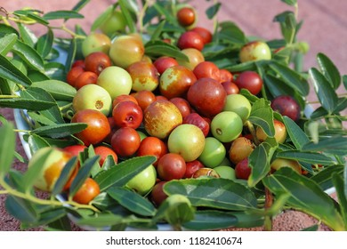 Jujube, dried seasonal fruit to be eaten fresh or in alcohol as a digestive.