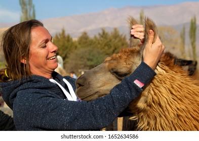 Jujuy, Northwest, Argentina.  September 11 2018: Woman stroking a llama (Lama glama), near to Tilcara, Jujuy.