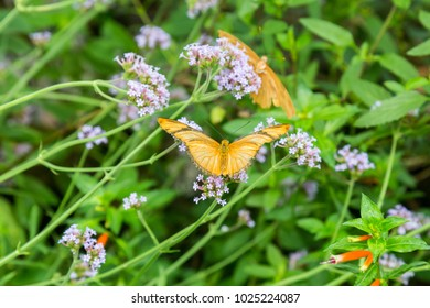 A Julia butterfly perched on flowers and foliage.