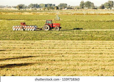 July 1, 2013 Idaho Falls, Idaho, USA Alfalfa hay, cut and wind rowed, being turned for drying in the fertile farm fields of Idaho.