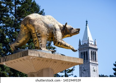July 13, 2019 Berkeley / CA / USA - Golden Bear Statue on UC Berkeley campus, symbol of UC Berkeley and its athletic teams, the California Golden Bears; the Campanile (Sather Tower) in the background