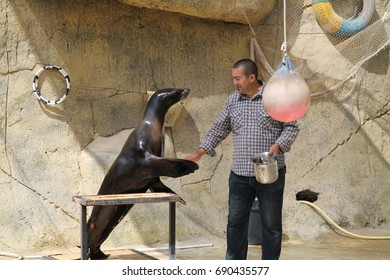 """July 20, 2017 Zoo """"Friguia"""". Tunisia. Show of fur seals. This a open event no press credentials required."""
