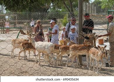 "July 20, 2017 Zoo ""Friguia"", Tunisia. Deer in the zoo."