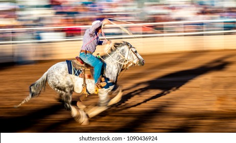 JULY 22, 2017 NORWOOD COLORADO - Cowboys ride and rope cattle during San Miguel Basin Rodeo, San Miguel County Fairgrounds