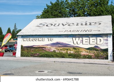 JULY 5 2015 - WEED, CALIFORNIA: The Weed Souvenir gift shop sells various marijuana themed merchandise as a play and pun on the town's name.
