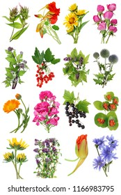 July  summer European  plants   and flowers set. Isolated on white studio macro shots.  Full size images find  in my portfolio