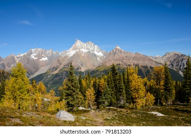 Jumbo Pass, British Columbia, Canada in Fall with Golden Larch. Purcell Mountain Landscape