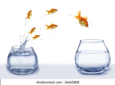jump gold fish from aquarium to aquarium on white background