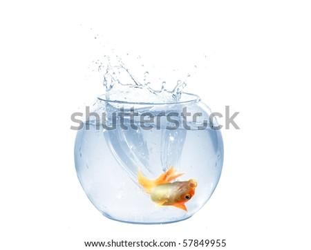 Jump Gold Fish Aquarium On White Stock Photo Edit Now 57849955