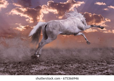 Jump of a gray playing horse
