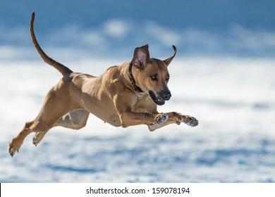 Jumped dog
