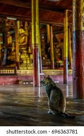 Jumping Cat Monastery (Nga Phe Kyaung)