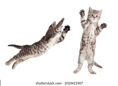jumping cat set isolated