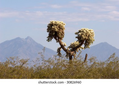 Jumping Cholla Cactus, with mountains in the background