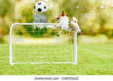 Jumping dog catching football (soccer) ball playing at playground with mini goal