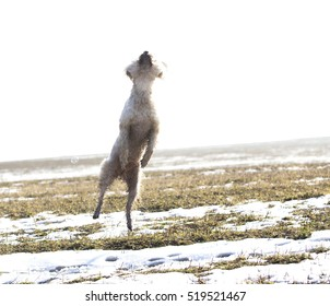 Jumping dog having fun in winterm , superdog