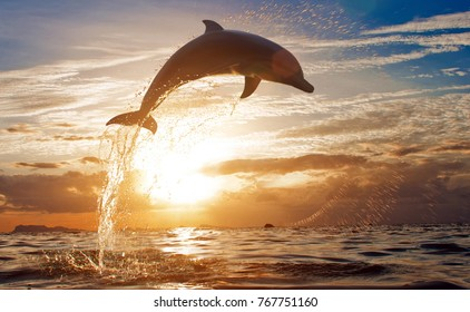 Jumping dolphin in the sea