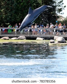 jumping dolphins in a dolphinarium in the Netherlands