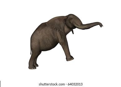 jumping elephant isolated on white