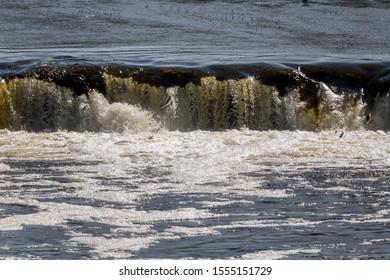 Jumping fish in waterfall Ventas rumba, Latvia.