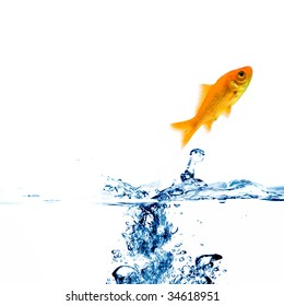 jumping golden fish