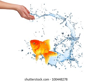 Jumping golden fish out of hand,concept of challenge