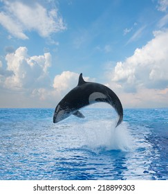 jumping killer whale, seascape with  ocean  waters and cloudscape