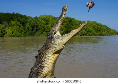 Jumping saltwater crocodile in Kakadu National Park in Australia's Northern Territory.