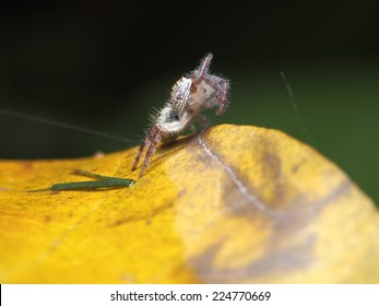 Jumping Spider in the nature