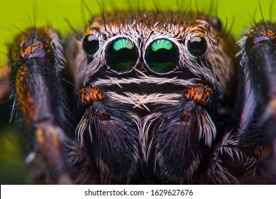 Jumping spider in nature on colorful background