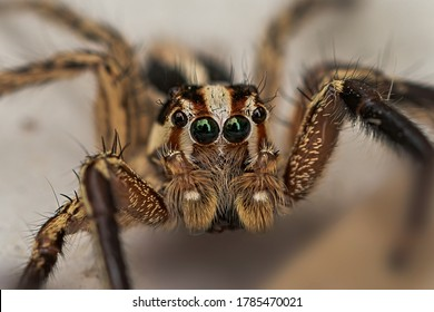 The jumping spider is a type of spider that gets its common name from its jumping ability, which it uses to catch prey.Jumping spiders are harmless, beneficial creatures.