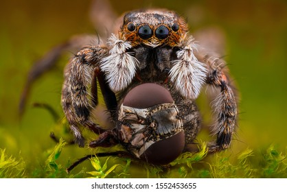 Jumping spiders (Salticidae) are a family of spiders containing 20 described subfamilies, 553 genera and 5025 species , making it the largest spider family comprising about 13% of all species.
