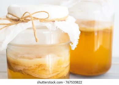 Jun Tea SCOBY, fermented drink jun tea healthy natural probiotic