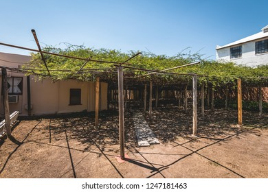 June 20, 2018 - Rose Tree Museum in Tombstone Arizona. The worlds largest rosebush planted in 1885.
