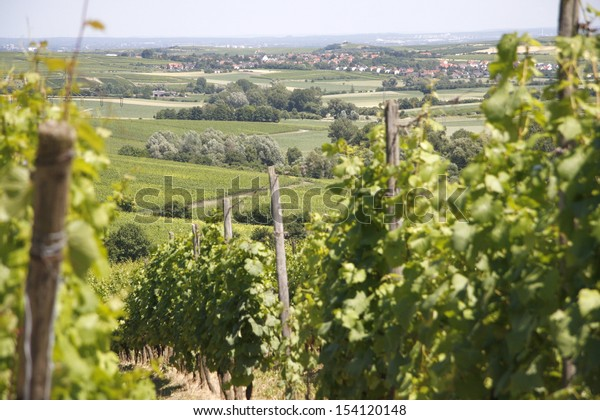JUNE 2008 - ZORNHEIM: vineyards in Rhineland Palatine, Germany.