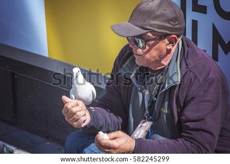 3b663f2a JUNE 2016, COPENHAGEN DENMARK: Homeless man feeding a white pigeon off his  hand