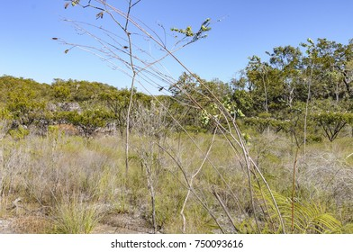 June 2017, National Park Chapada dos Veadeiros, Alto Paraiso de Goias, Goias, Brazil, ICMBIO Jurisdiction, view of the vegetation of National Park Chapada dos Veadeiros