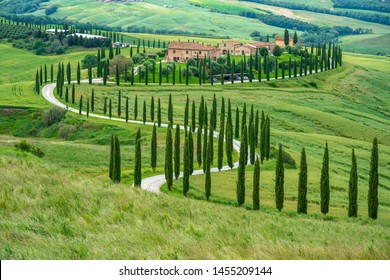 June 2019 - Val D'Orcia, Tuscany, Italy: rural estate with street with cypresses typical of Tuscany, countryside landscape with green fields as background.